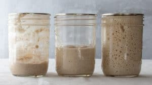Easy and Fast Sourdough Starter